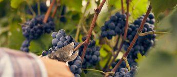 Weinfachberater Ausbildung IWI
